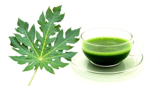 Medicinal use of Papaya leaves juice in Dengue