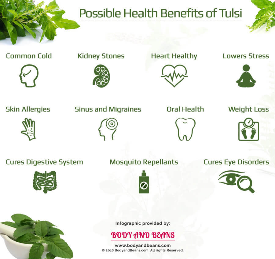 Possible health benefits of Tulsi or Basil