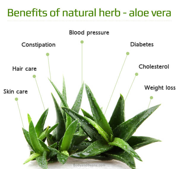 Benefits of Aloe Vera for Skin, Weight Loss and Health