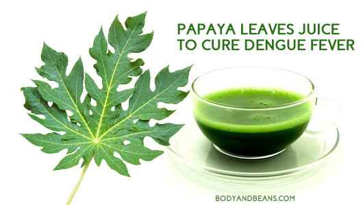 Papaya Leaves Juice to Cure Dengue Fever? Here's What Researchers Says