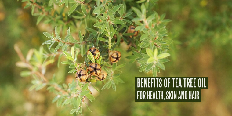29 Benefits of Tea Tree Oil for Health, Skin and Hair