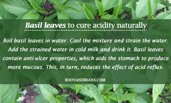 Basil leaves to cure acidity naturally