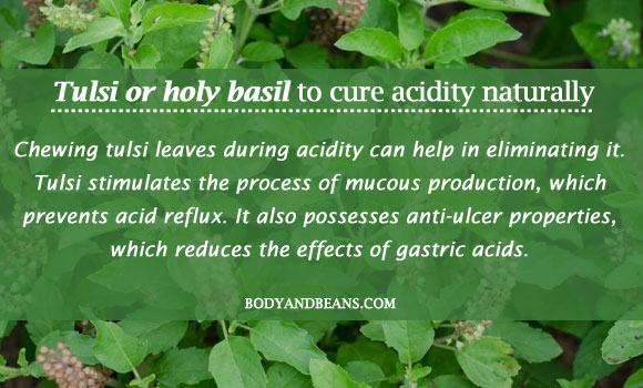 Tulsi or Holy Basil to cure acidity naturally