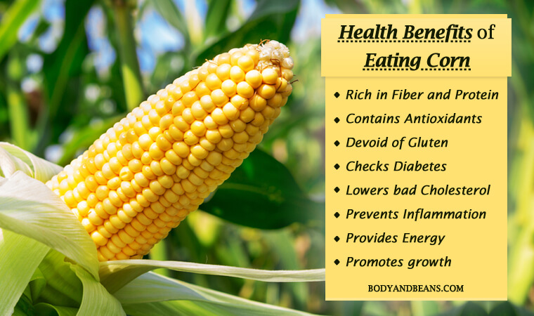 Health Benefits of Corn: Rich in Fiber, Protein and Antioxidants
