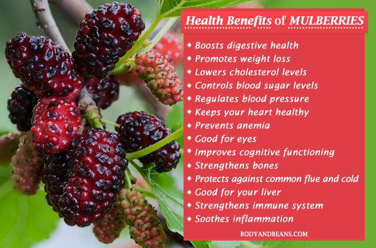 15 Health Benefits of Mulberries: Weight Loss to Cholesterol
